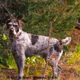 Lincoln_-Montana-Dogs-9-09-01