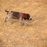 Puppies-3.1.15-16
