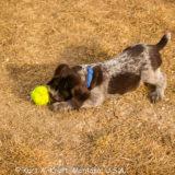 Puppies-3.1.15-20