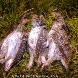 Tims-camera-Montana-hunting-10.10-17