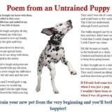 Untrained-puppy